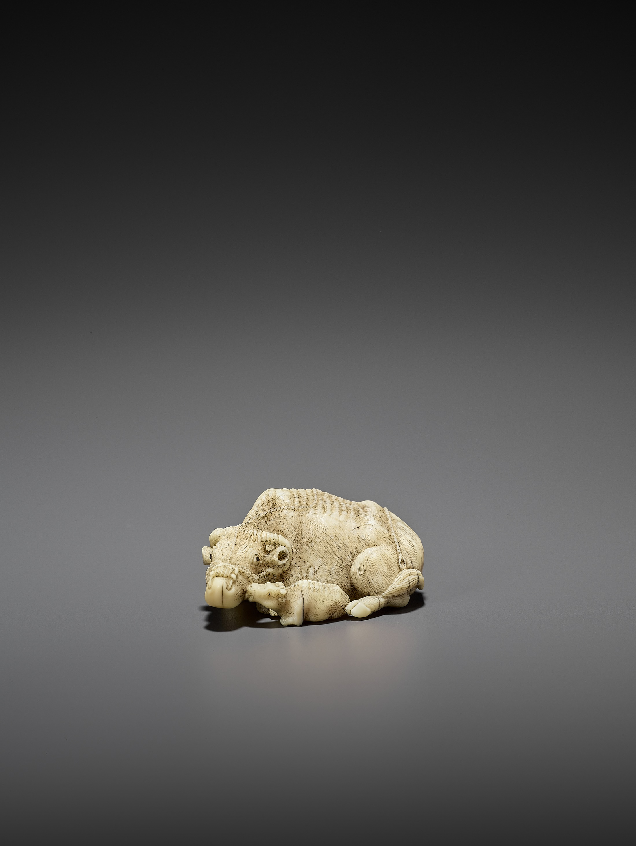 MITSUCHIKA: A LARGE AND RARE WALRUS IVORY NETSUKE OF A RECUMBENT COW WITH CALF