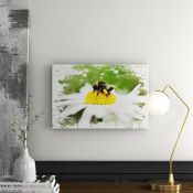 East Urban Home,'Bumble Bee White Daisy' Graphic Art Print on CanvasRRP -£55.99 (15266/3 -WLDJ4559)