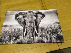 ELEPHANT PICTURE
