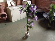 The Seasonal Aisle,Wisteria Plant in Pot RRP -85.99 (22223/4 -HETC7597)