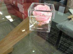 Eternal Petals One Year Rose Gift (Pink) RRP -£23