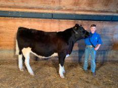 "Tanner Fenske - Maine Anjou Steer ""Panini"" - Weight 1170 Lbs"