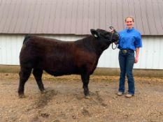 "Cassidy Fenske - Maine-Anjou, Angus Cross Steer ""Happy Gilmore"" - Weight 1325 Lbs"