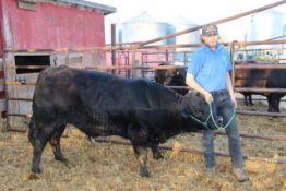 "Travis Nikiforuk – Market Steer ""Jake"" - Weight 1350 Lbs"