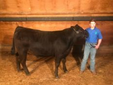 Jace Walsh - Limousin Angus Cross Steer - Weight 1300 Lbs