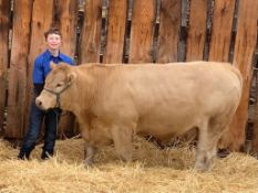 """Justin Ference - Charolais Cross Steer """"Drake"""" - Weight 1370 Lbs"""