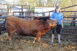 "Eric Nikiforuk – Market Steer ""Red"" - Weight 1390 Lbs"