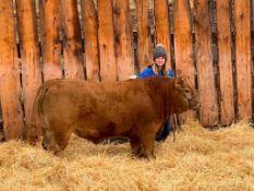 "Brieann Sinnott - Angus x Charolais Steer ""Captain"" - Weight 1280 Lbs"