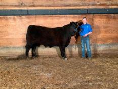 "Colton Fenske - Maine Anjou Steer ""Harley"" - Weight 1220 Lbs"