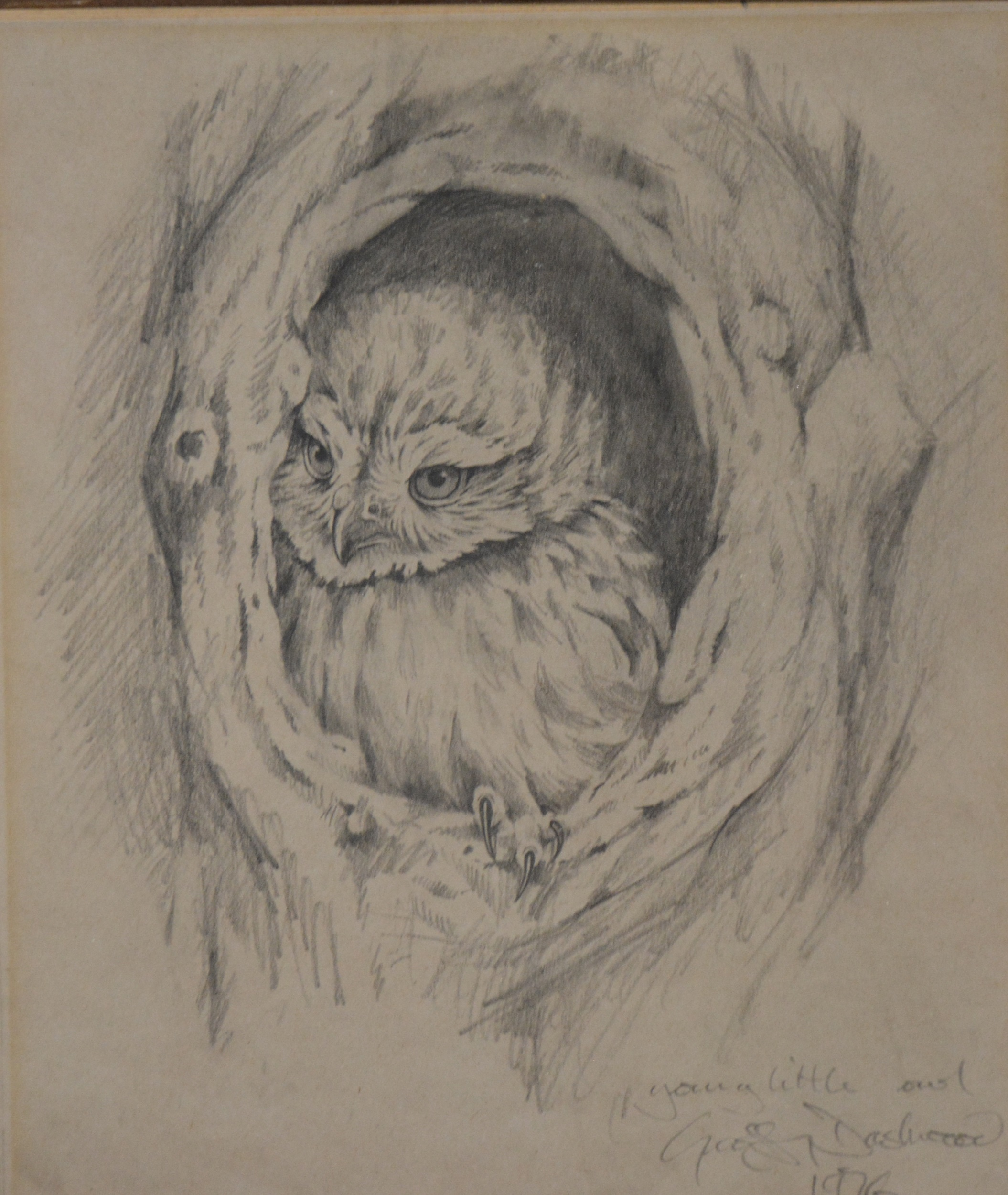 Geoffrey Dashwood, Young Little Owl