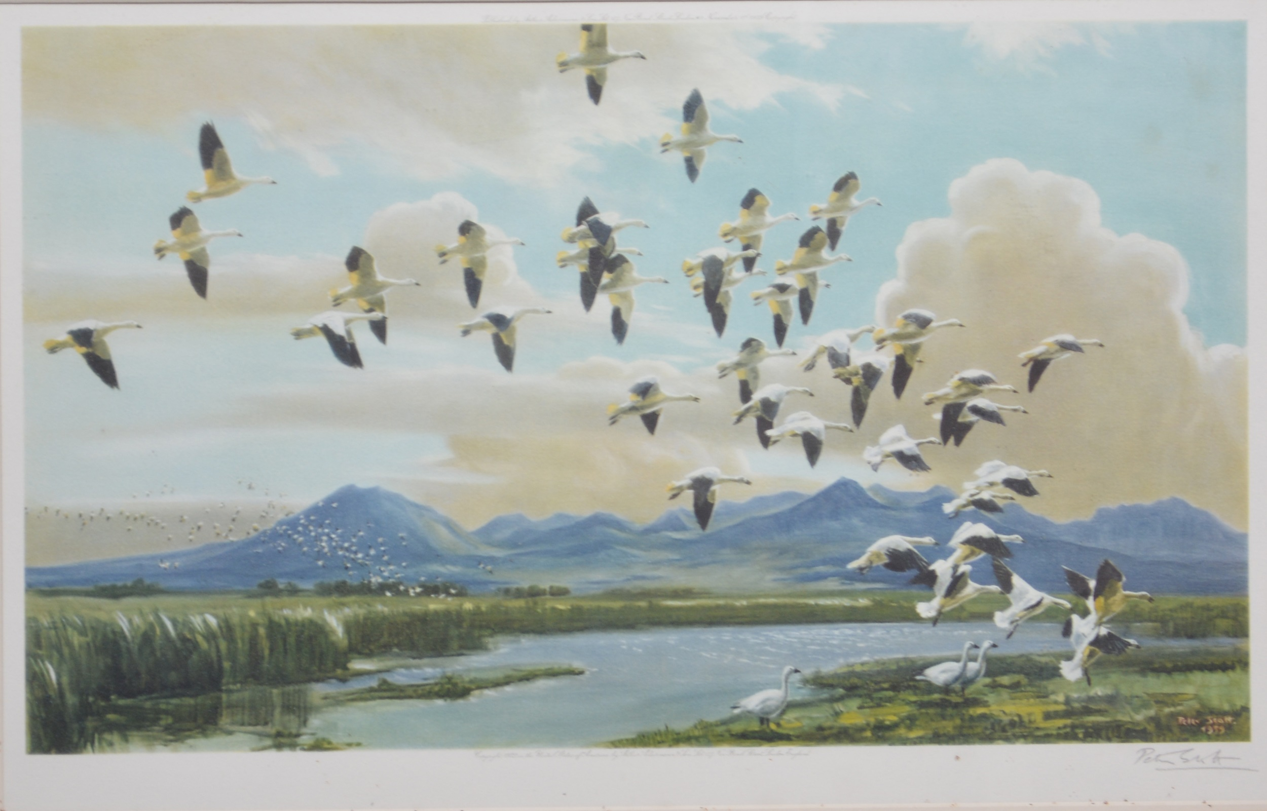 Peter Scott, Snow geese in California,