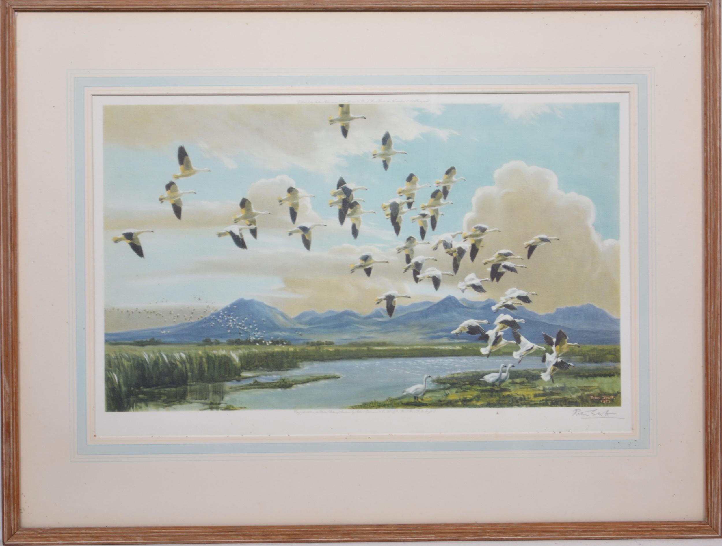 Peter Scott, Snow geese in California, - Image 2 of 4