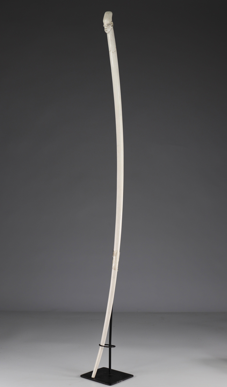 Rare prestige Mangbetu scepter in ivory -. Early 20th - Ground floor - Image 2 of 6