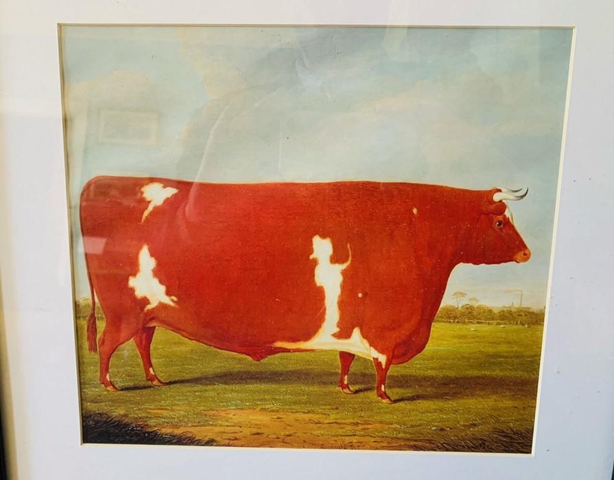 Collection of nine framed prints, comprising: Eli Marsden Wilson (1877-1965), Poplar Hawk Moth, - Image 10 of 10