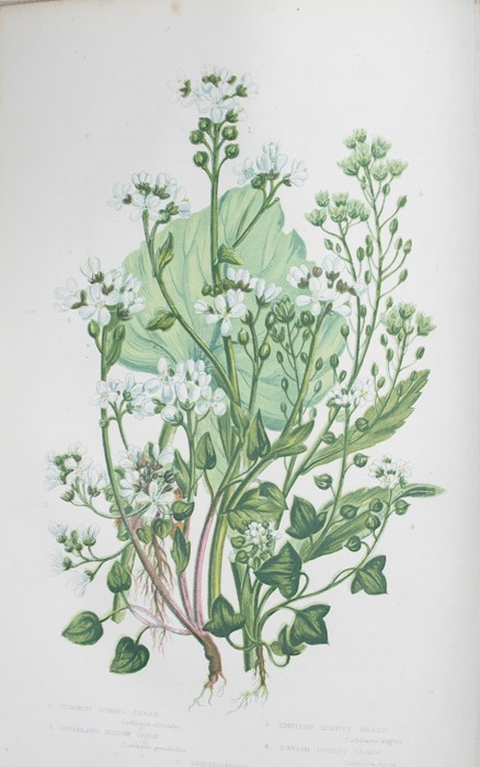 Pratt, Anne. The Flowering Plants, Grasses, Sedges, and Ferns of Great Britain, in six volumes, - Image 3 of 3