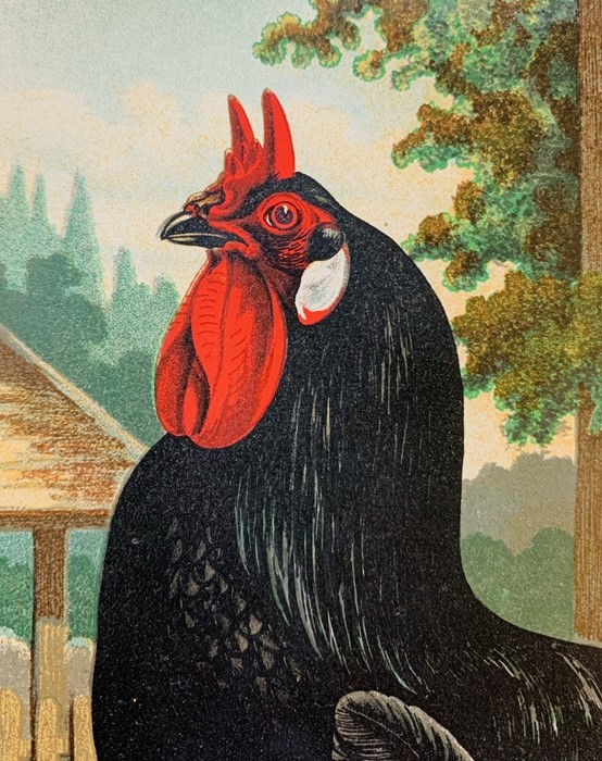 Wright, Lewis. The Illustrated Book of Poultry, London: Cassell, 1880. Quarto, publisher's pictorial - Image 5 of 7