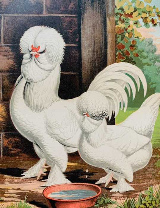 Wright, Lewis. The Illustrated Book of Poultry, London: Cassell, 1880. Quarto, publisher's pictorial - Image 4 of 7