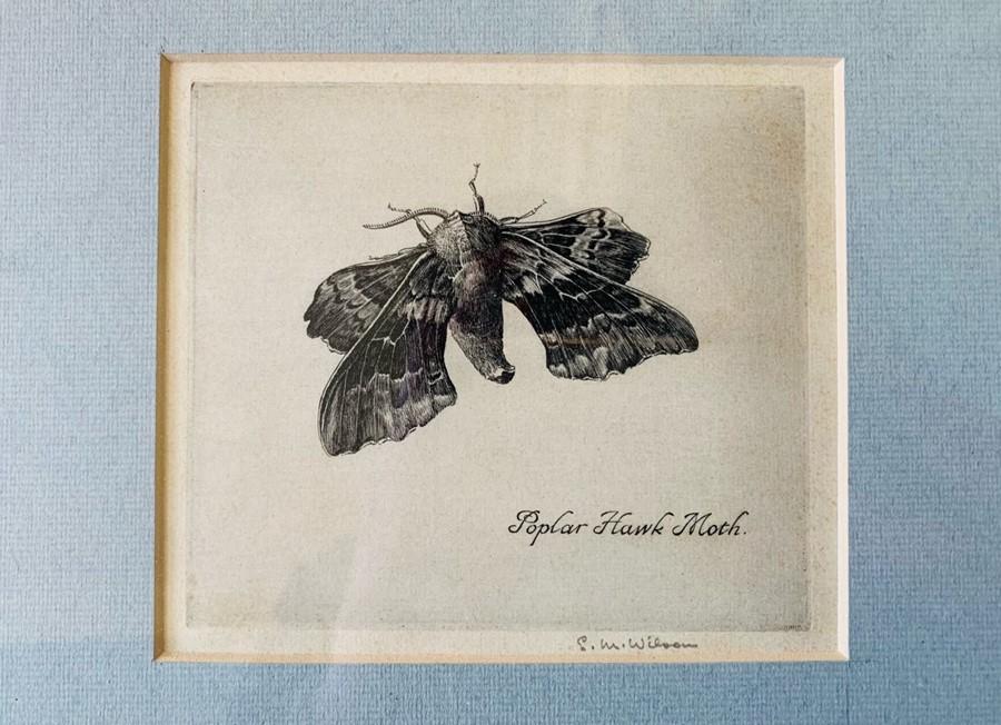 Collection of nine framed prints, comprising: Eli Marsden Wilson (1877-1965), Poplar Hawk Moth,