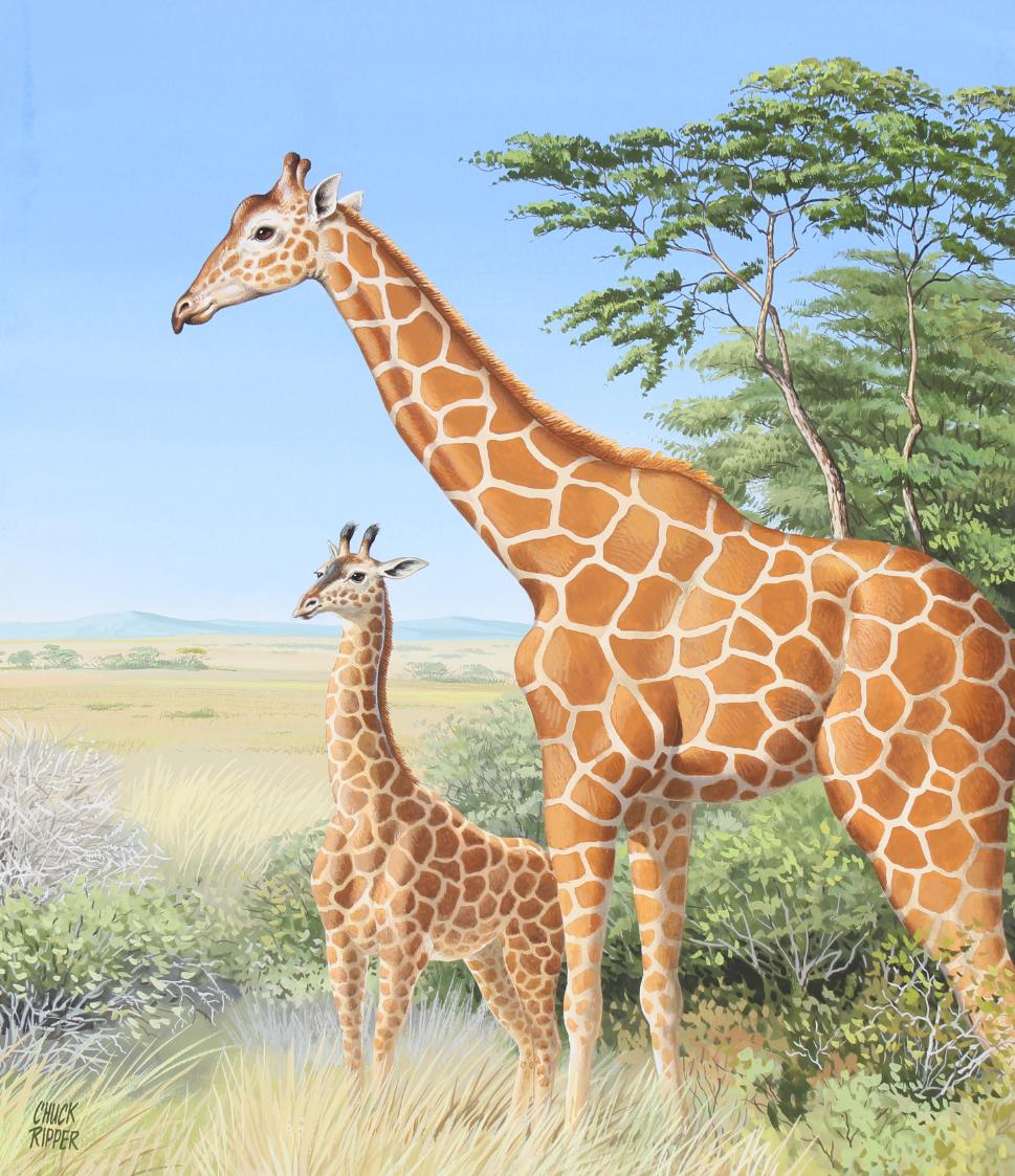 """Chuck Ripper (B. 1929) """"Two Giraffes"""""""