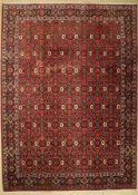 Bidjar fein, Persien, ca. 40 Jahre, Korkwolle, ca. 355 x