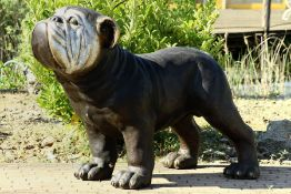 Bulldogge,  Bronze, dunkelbraun patiniert, Gesichtspartie