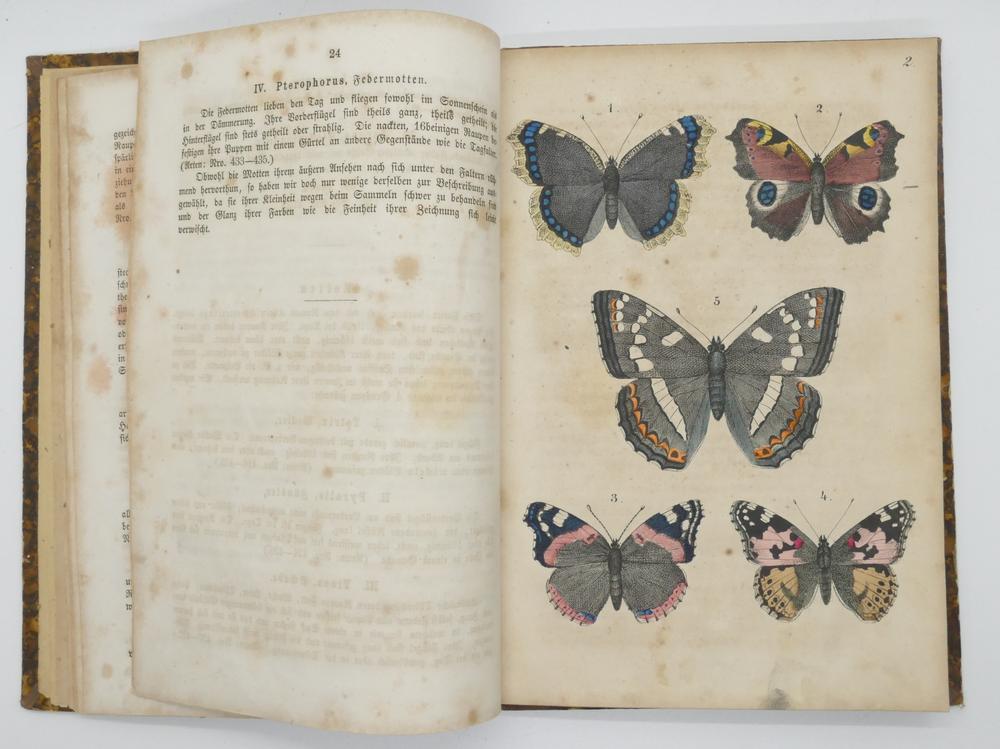FRANZ STRÄSSLE (1817-1906)Schmetterlingsbuch: Anleitung zum fangen und aufbewahren der Schmetterling - Image 3 of 3