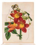 LEMAIRE, Charles (1800-1871). Le Jardin Fleuriste, journal general des progres et des interets horti