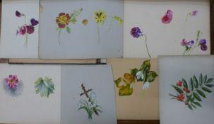 A folio of six botanical studies, watercolours and gouache, various sizes