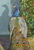 Carl Henderson, Peacock, oil on board, 91 x 61cms, unsigned, label verso, unframed