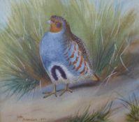 John Baxendale, ornothological study, watercolour, 13 x 15cms, framed, Brotherton Gallery Ltd. label