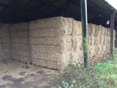 85 MF 2270 90x120x240 Bales Only Meadow Hay in a barn - 48t approx. Robert Lenton Ltd., West Farm, P