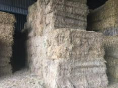 40 Quadrant Bales Only Mixture Hay in a barn. CE Schwier and Son, Burleigh Hill Farm, PE27 3LY