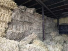 500 Conventional Flat 8 Bales only Meadow Hay in a barn. J T Lines and Son, Papley Grove Farm, PE19