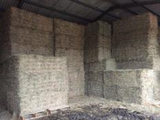 500 Flat 8 Bales only Meadow Hay in a barn in Barron 21 bale packs - 10t approx. Equifeedz Ltd., Rav