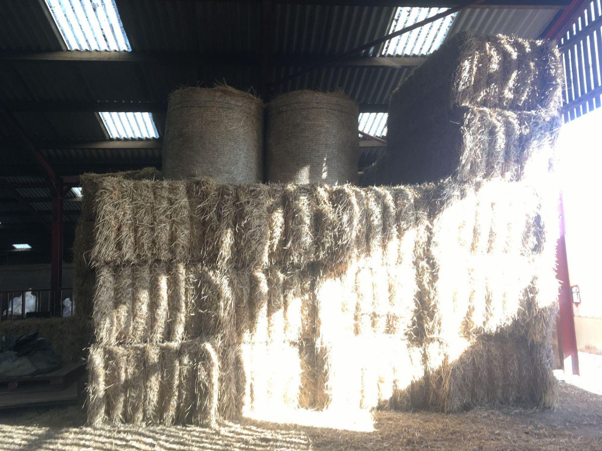 Qty of 2020 straw bales (circa 38 bales) - Image 4 of 4