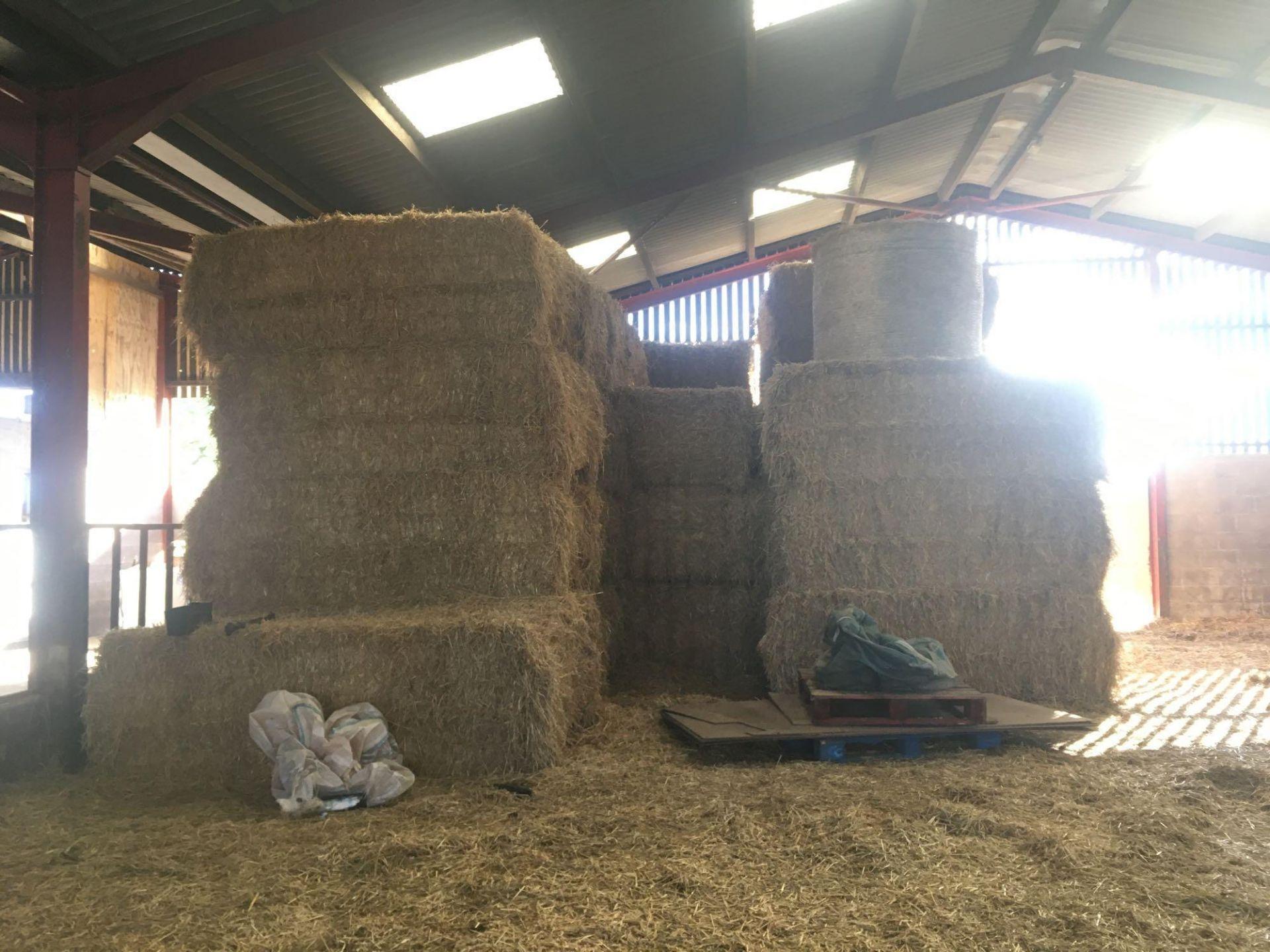 Qty of 2020 straw bales (circa 38 bales) - Image 3 of 4