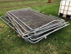 13No. Herras fencing sections