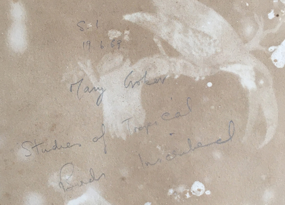 19th century watercolour study of tropical birds, inscribed to the reverse Mary Croker (?) 1869, - Image 2 of 2