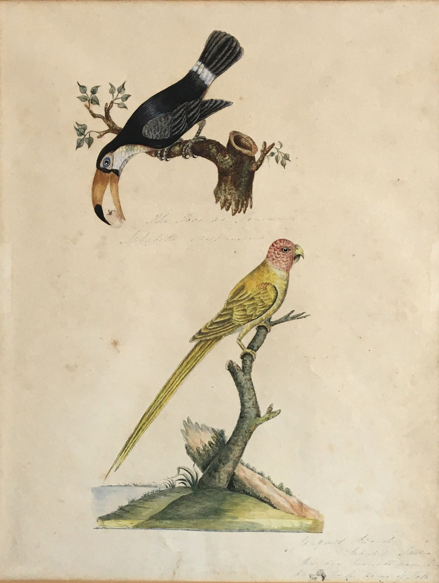 19th century watercolour study of tropical birds, inscribed to the reverse Mary Croker (?) 1869,