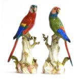A pair of late 19th century Meissen parrots with colourful plumage perched upon tree stumps, first