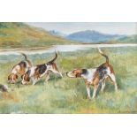F.N. Drake, a study of three fox hounds, oil on board, signed and dated 1905, 17x24cm