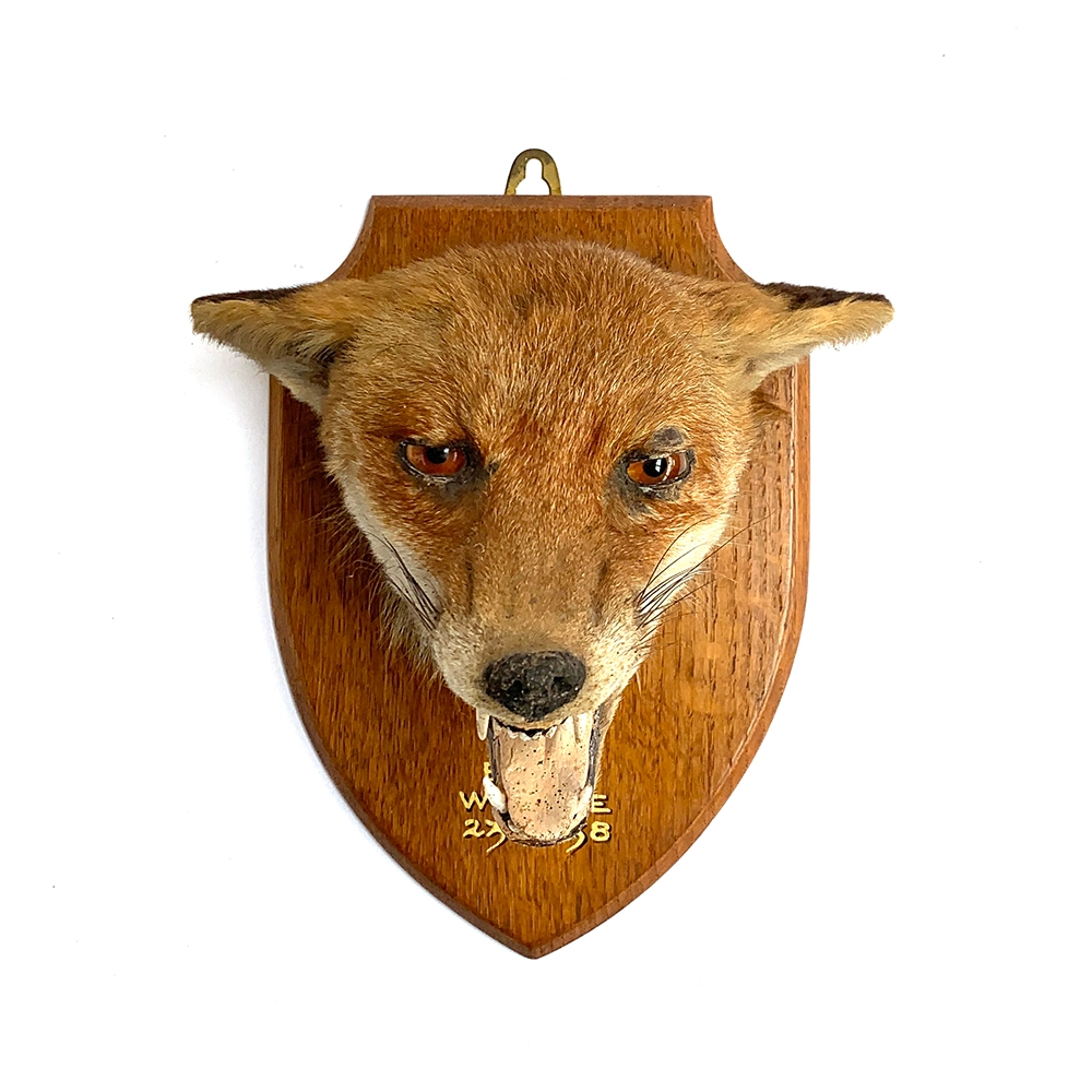 Taxidermy interest: a fox's mask mounted on a wooden shield, inscribed 'East Devon Hunt, Whimple,