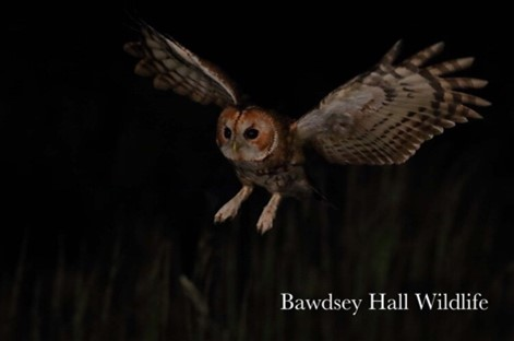 Enjoy a night time wildlife photography experience at Bawdsey Hall in Suffolk – photograph from a