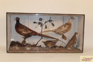 A large cased taxidermy study pf pheasants, Englis