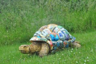 Binnit the Tin Can Tortoise