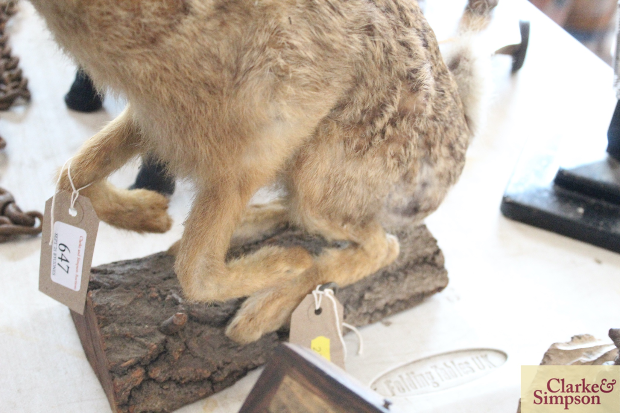 A taxidermy hare on a log - Image 5 of 8