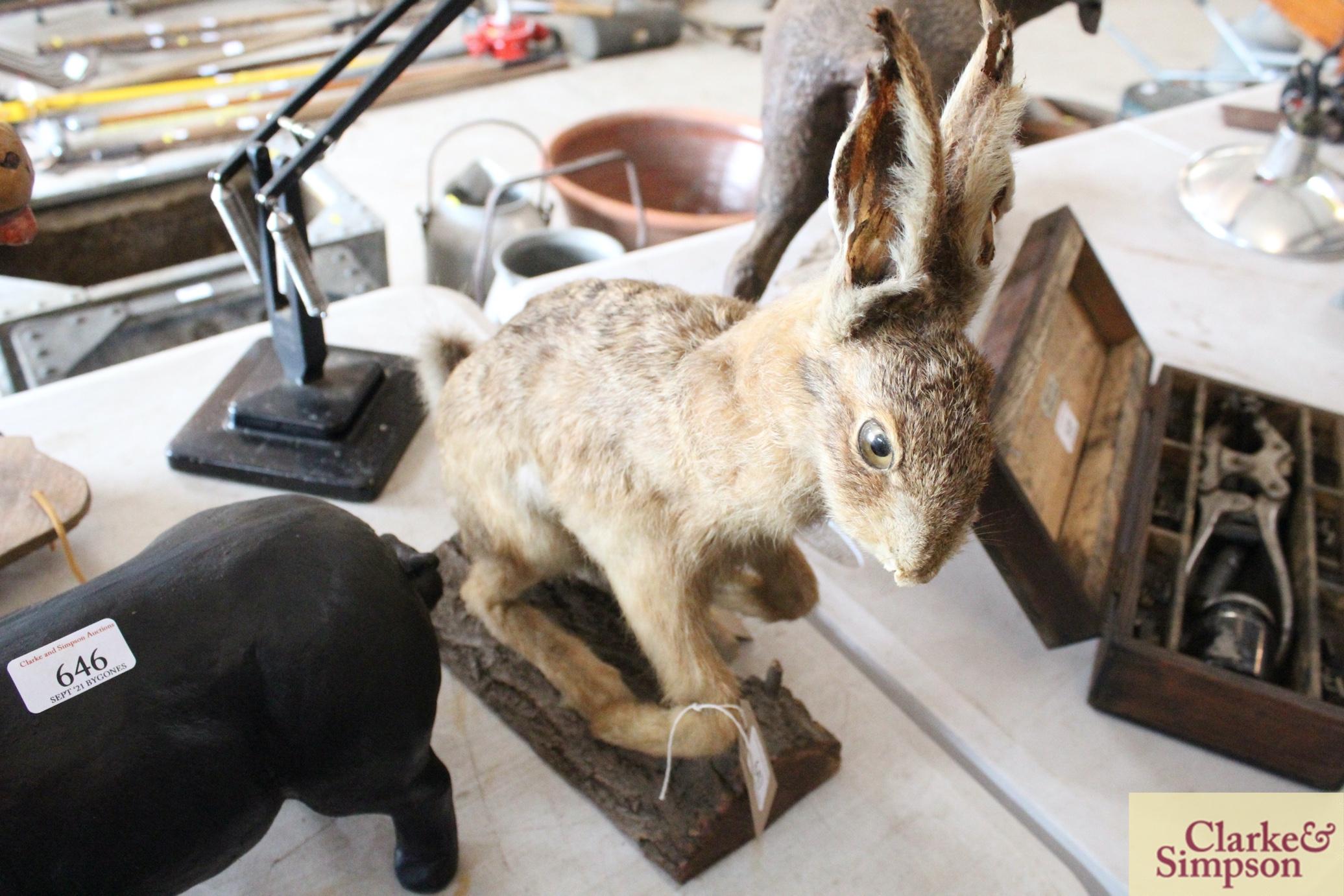 A taxidermy hare on a log