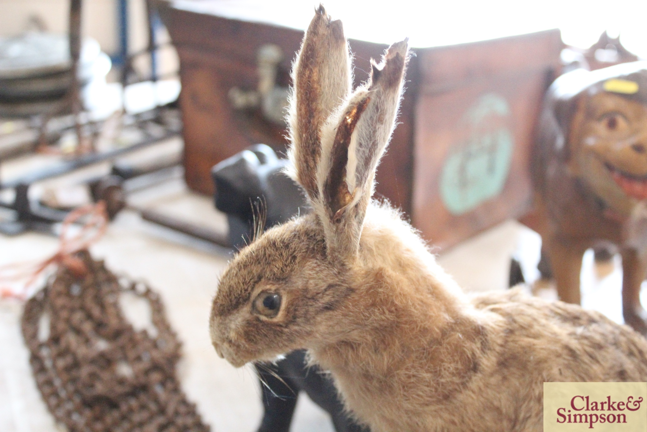 A taxidermy hare on a log - Image 3 of 8