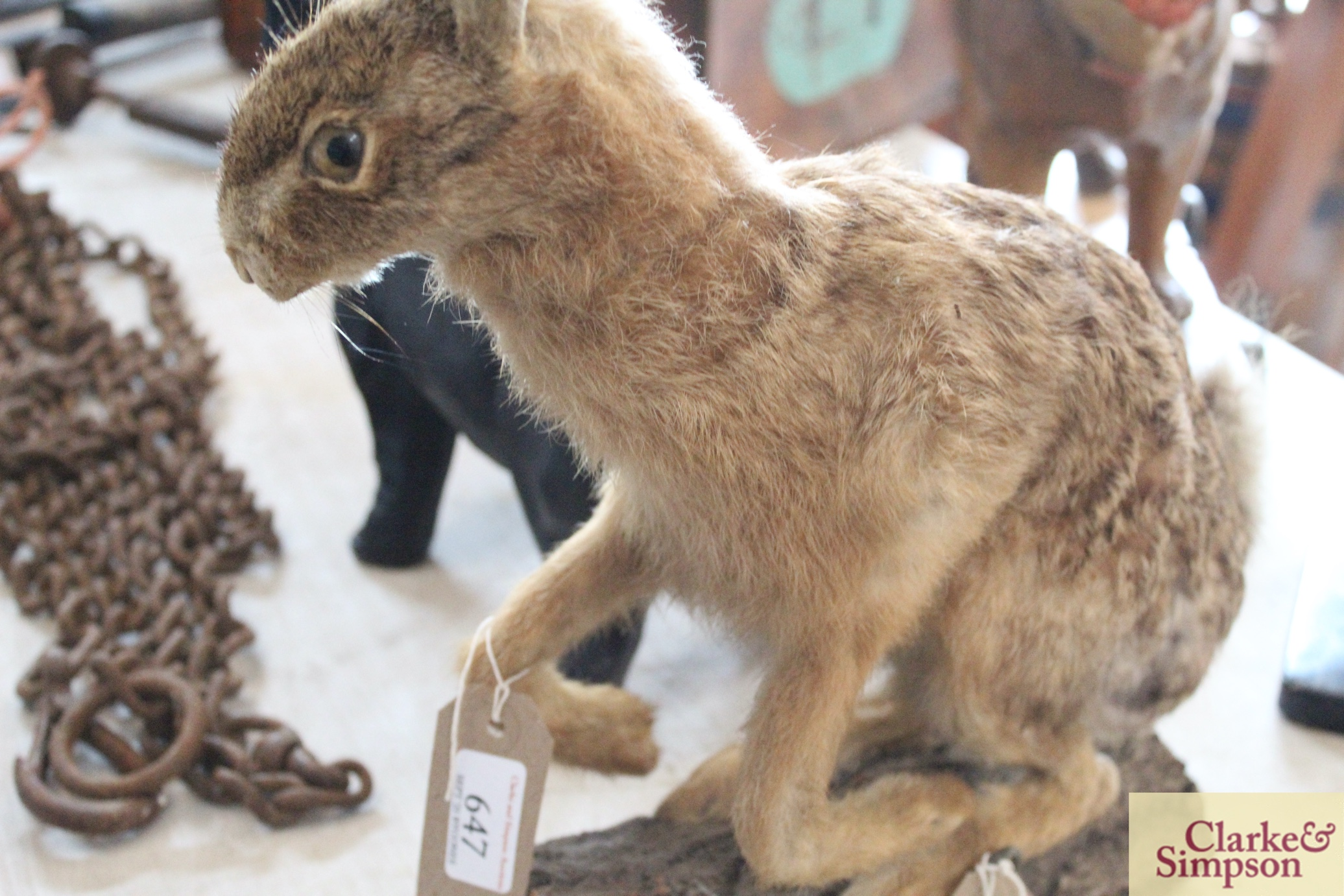 A taxidermy hare on a log - Image 4 of 8