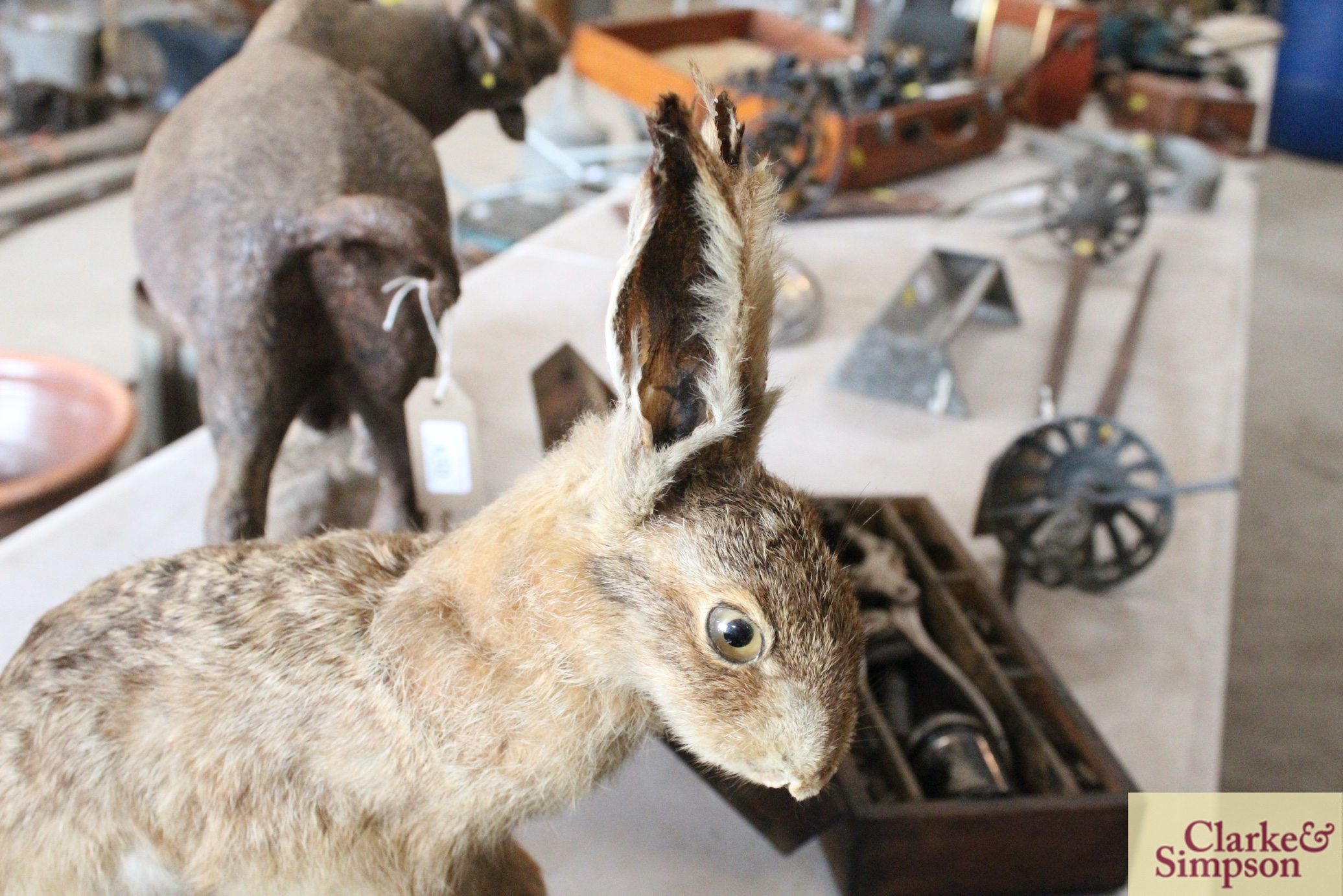 A taxidermy hare on a log - Image 6 of 8